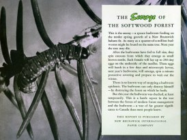 battle-of-the-budworm_1953-2