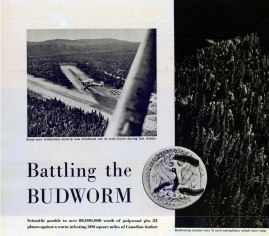 "From photo article ""Battling the Budworm"", LOOK Magazine, 1952. Produced by Ken Kocivar, photographed by Frank Bauman. Those are budworm caterpillars on the coin."