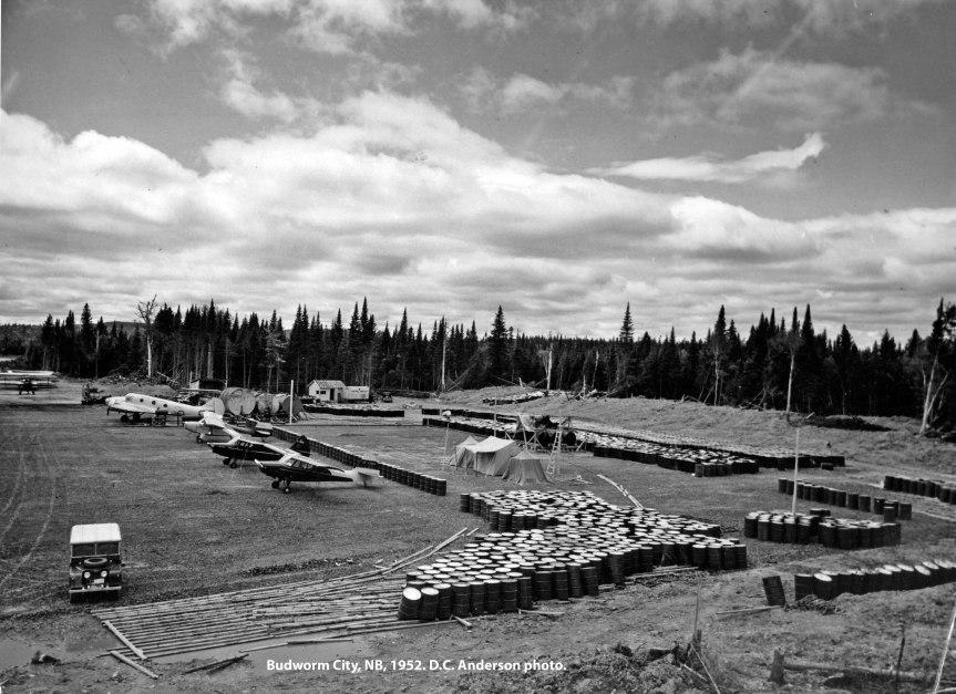 Budworm City, NB, 1952. D.C. Anderson photo.
